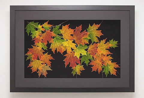 Leaf Lines - Extra Large Sugar Maple Shadow Box