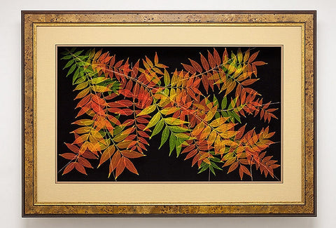 Leaf Lines - Extra Large Chinese Pistache Shadow Box