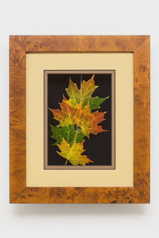 Booker Morey - Leaf Lines - Sugar Maple