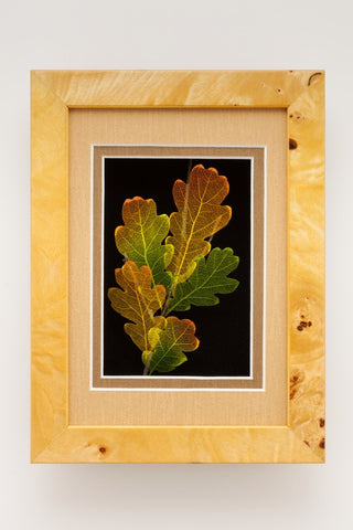Booker Morey - Leaf Lines - White Oak
