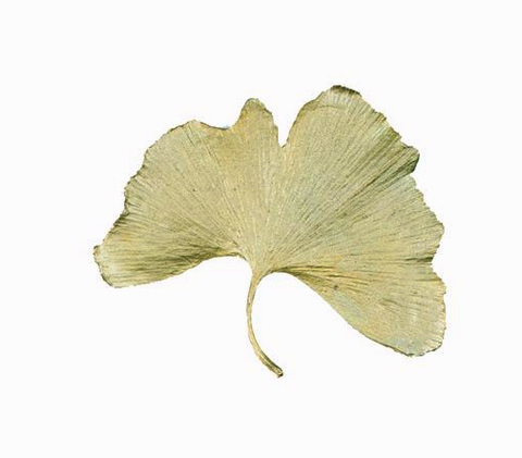 Silver Seasons - Michael Michaud - Ginkgo Large Leaf Pin