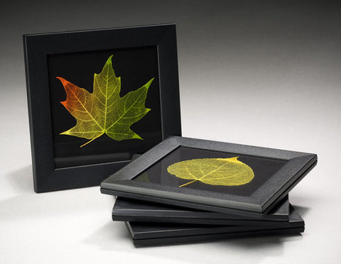 Booker Morey - Leaf Lines - Mixed Coaster Set