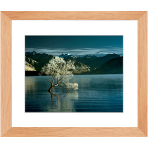 Framed Print - Lake Wanaka Tree, New Zealand, Pat Cahill