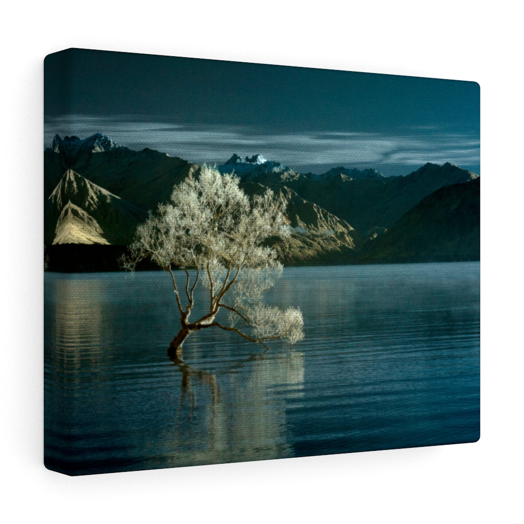 Gallery Wrap - Lake Wanaka Tree, New Zealand, Pat Cahill