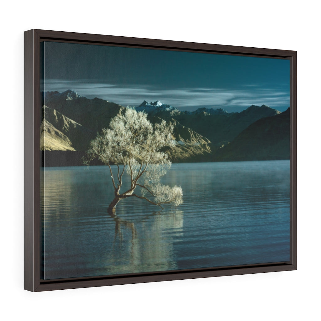 Framed Gallery Wrap - Lake Wanaka Tree, New Zealand, Pat Cahill