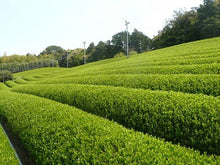 Load image into Gallery viewer, Sencha Green Tea (spring picking)