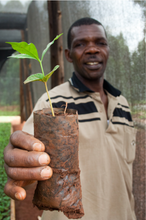 Load image into Gallery viewer, Uganda Organic Rainforest Alliance Certified