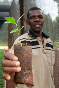 Uganda Organic Rainforest Alliance Certified