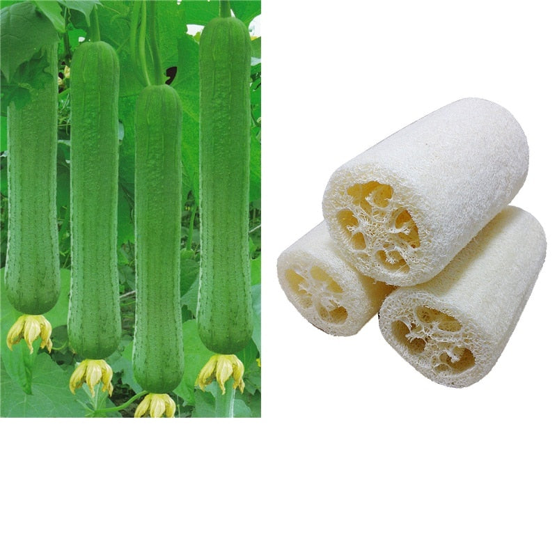 1PC New Household Natural Loofah - Average1