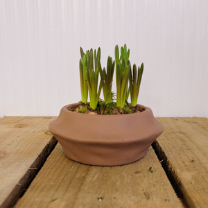 Muscari Bowl - The Nectary - Floral Styling