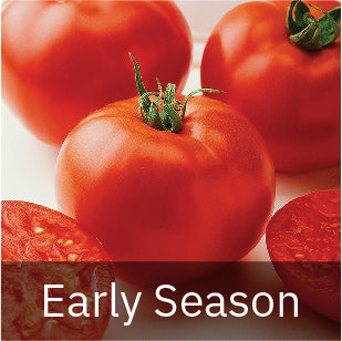 Tomatoes - Early Season