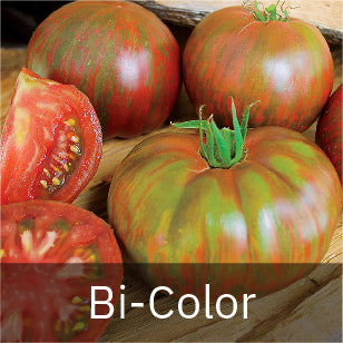 Tomatoes - Bi-Color