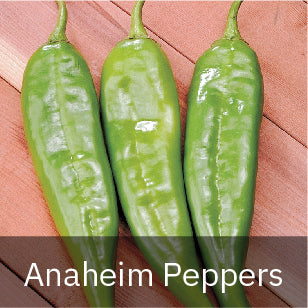 Peppers - Hot Peppers - Anaheim