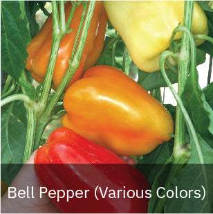 Bell Peppers (Various Colors)