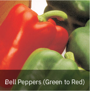 Peppers - Sweet Peppers - Bell Peppers (Green to Red)