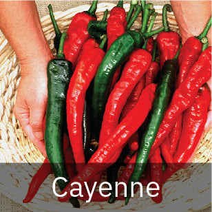 Peppers - Hot Peppers - Cayenne