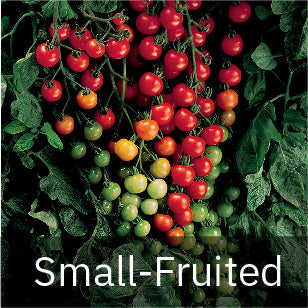 Small-Fruited