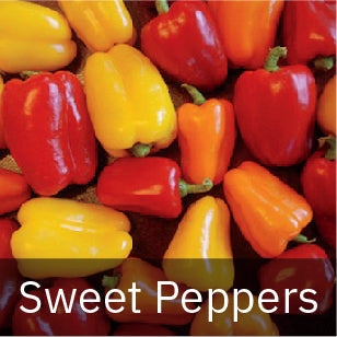 Peppers - Sweet Peppers