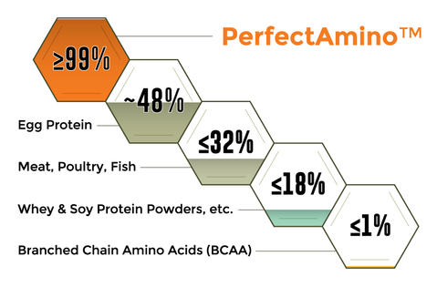 Perfect Amino Protein Absorption