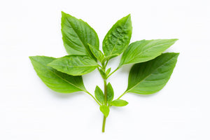 Basil Leaves (1 bunch)