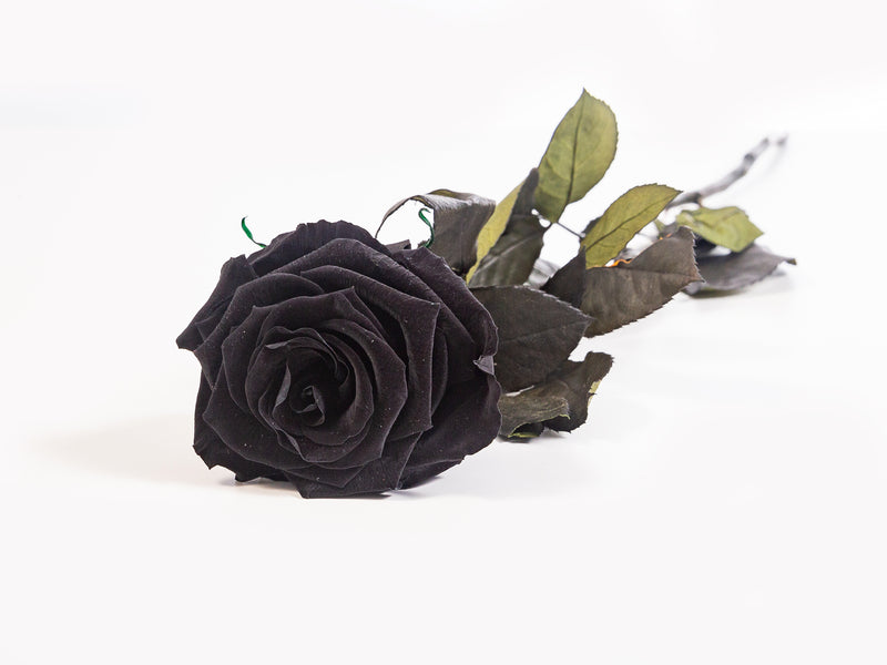 Stem Rose - Black beauty