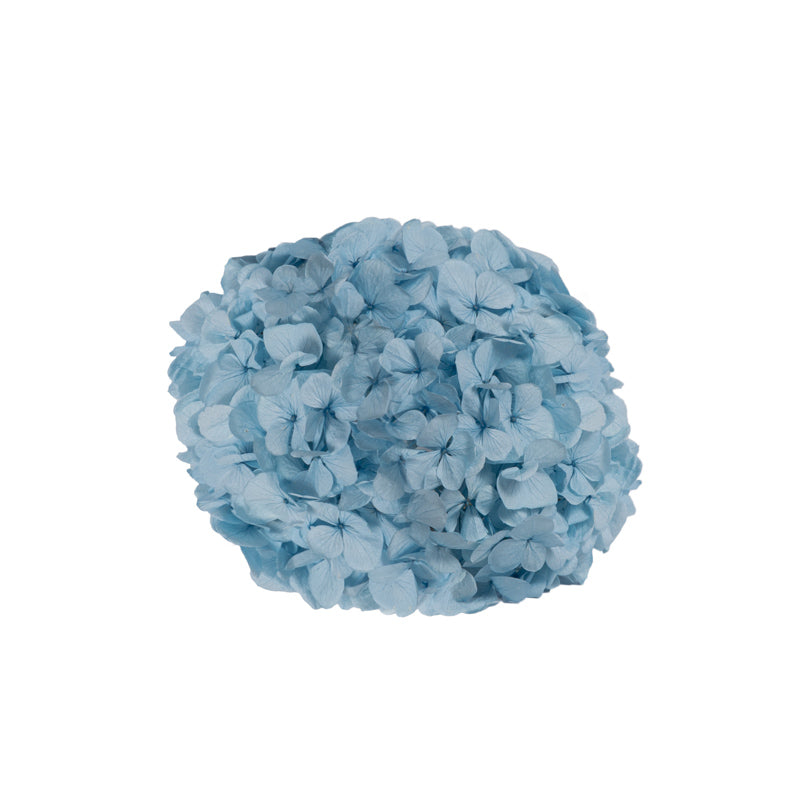 HORTENSIA PRESERVADA LIGHT BLUE