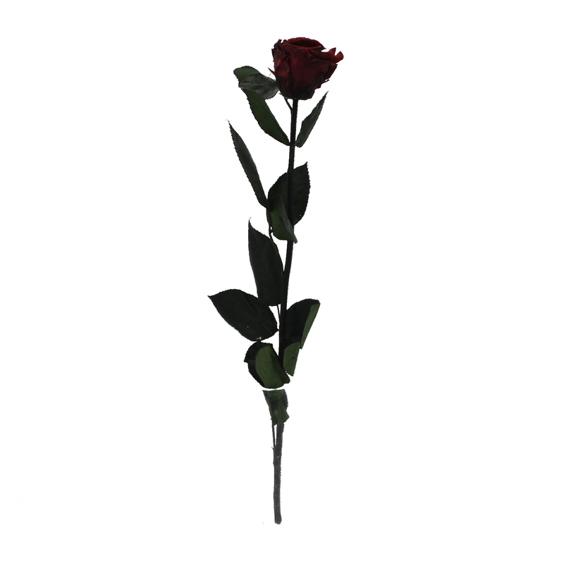 Stem Rose - Burgundy
