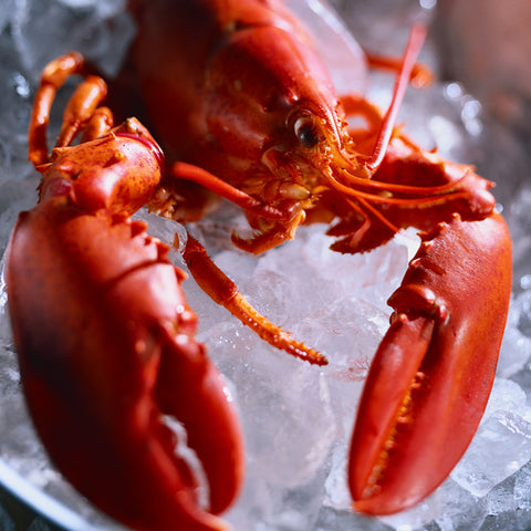 154A-lobster