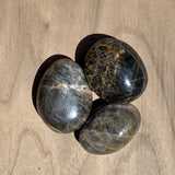 Black Moon Stone Palm Stones from Madagascar