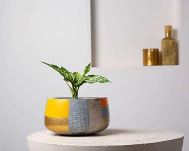 Concrete Modern Vessel Planter- Suryaasta Collection-Eliteearth