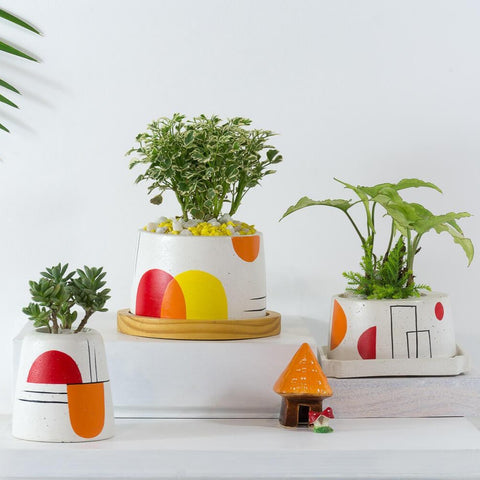 Concrete Cavern, Ellip & Cracker Barrell Planter Trio Avant Garde Collection-Eliteearth