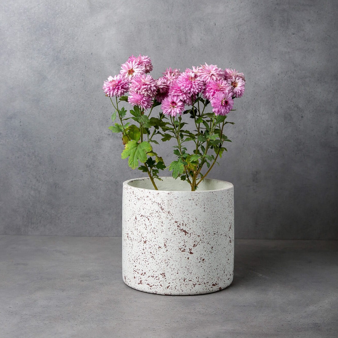 Concrete Midcentury Planter - Splash Collection-Eliteearth