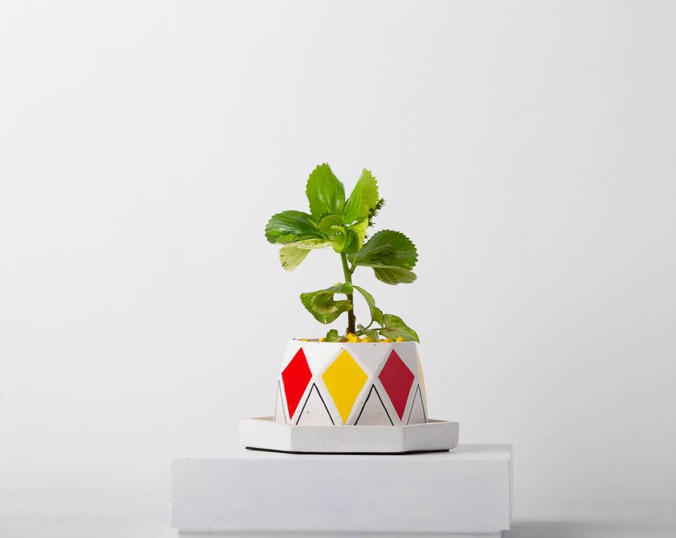 Concrete Diamante Planter-Avant-Garde Collection-Eliteearth
