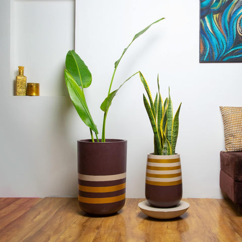 Concrete  Duo Parabola and Tulip Simply Stripy Combo -  The Golden Hour Collection-Eliteearth