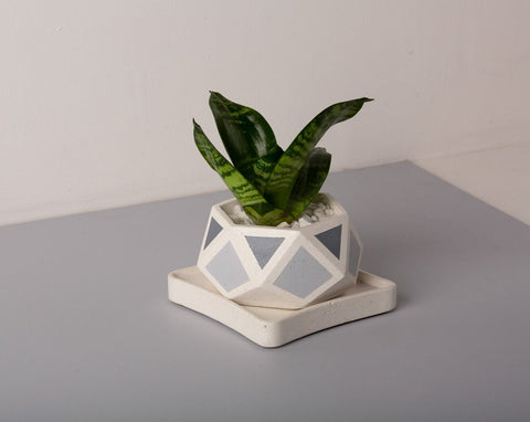 Concrete Hexamont Planter - Grey Invertrix Collection - Eliteearth