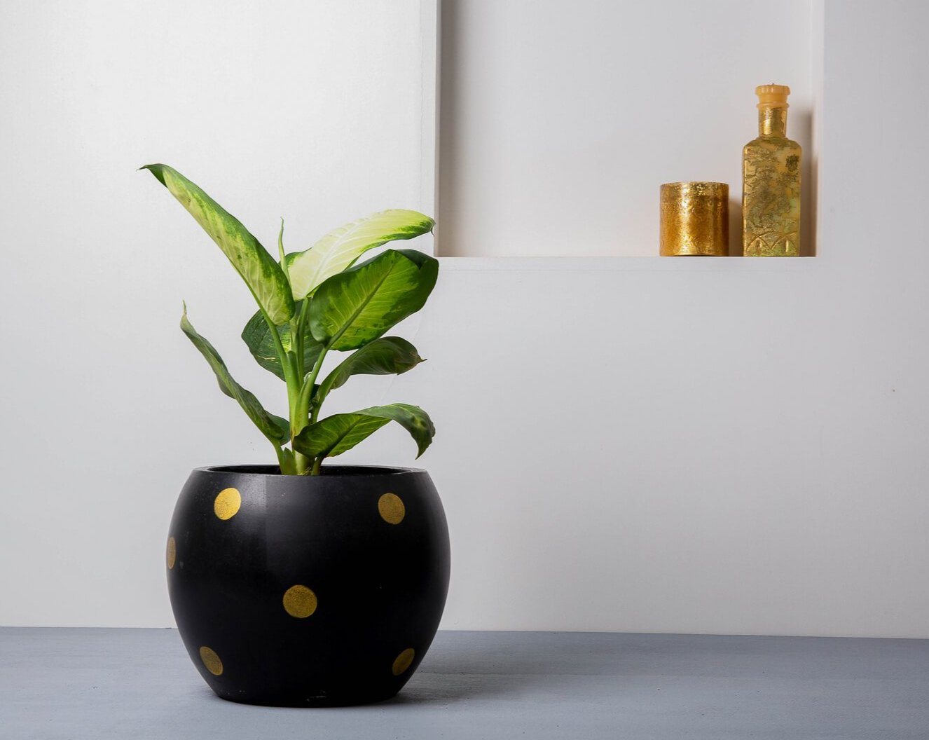 Concrete Meteor Planter Black/Gold Polka - Handpainted Collection-Eliteearth