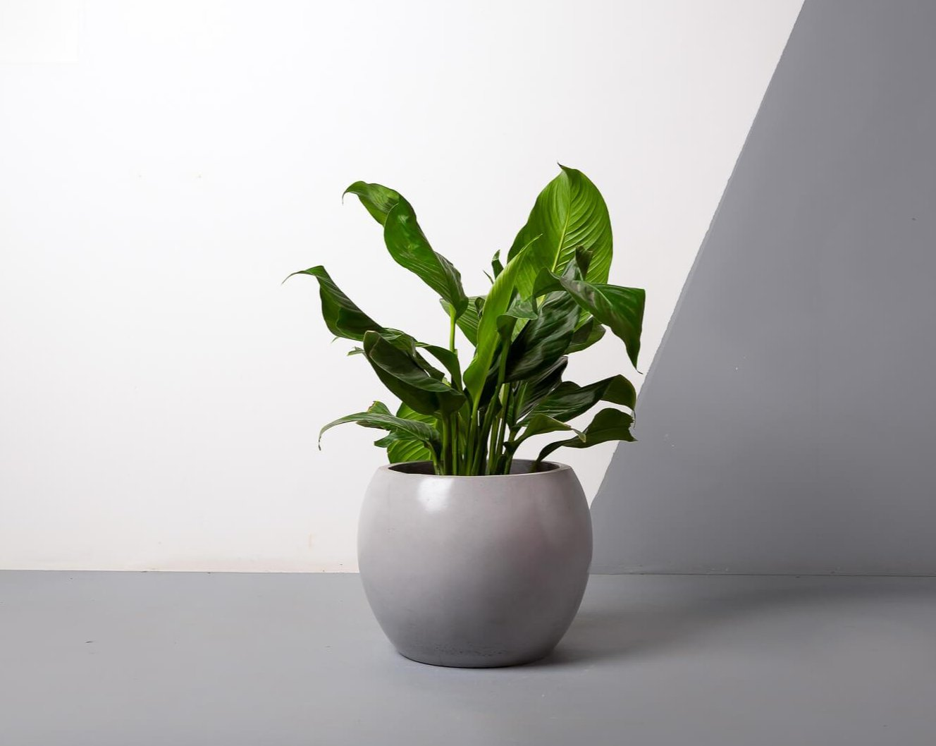 Concrete Meteor Planter - Grey-Eliteearth