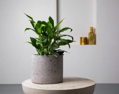 Concrete Mid-Century Planter - Handpressed Collection-Eliteearth