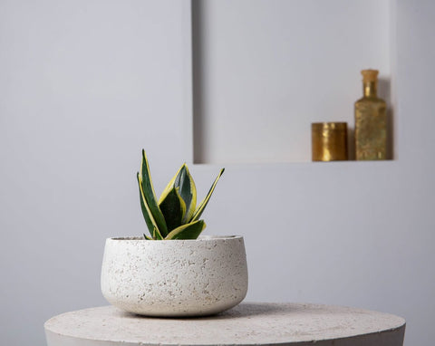 Concrete Modern Vessel Planter White -  Handpressed Collection-Eliteearth