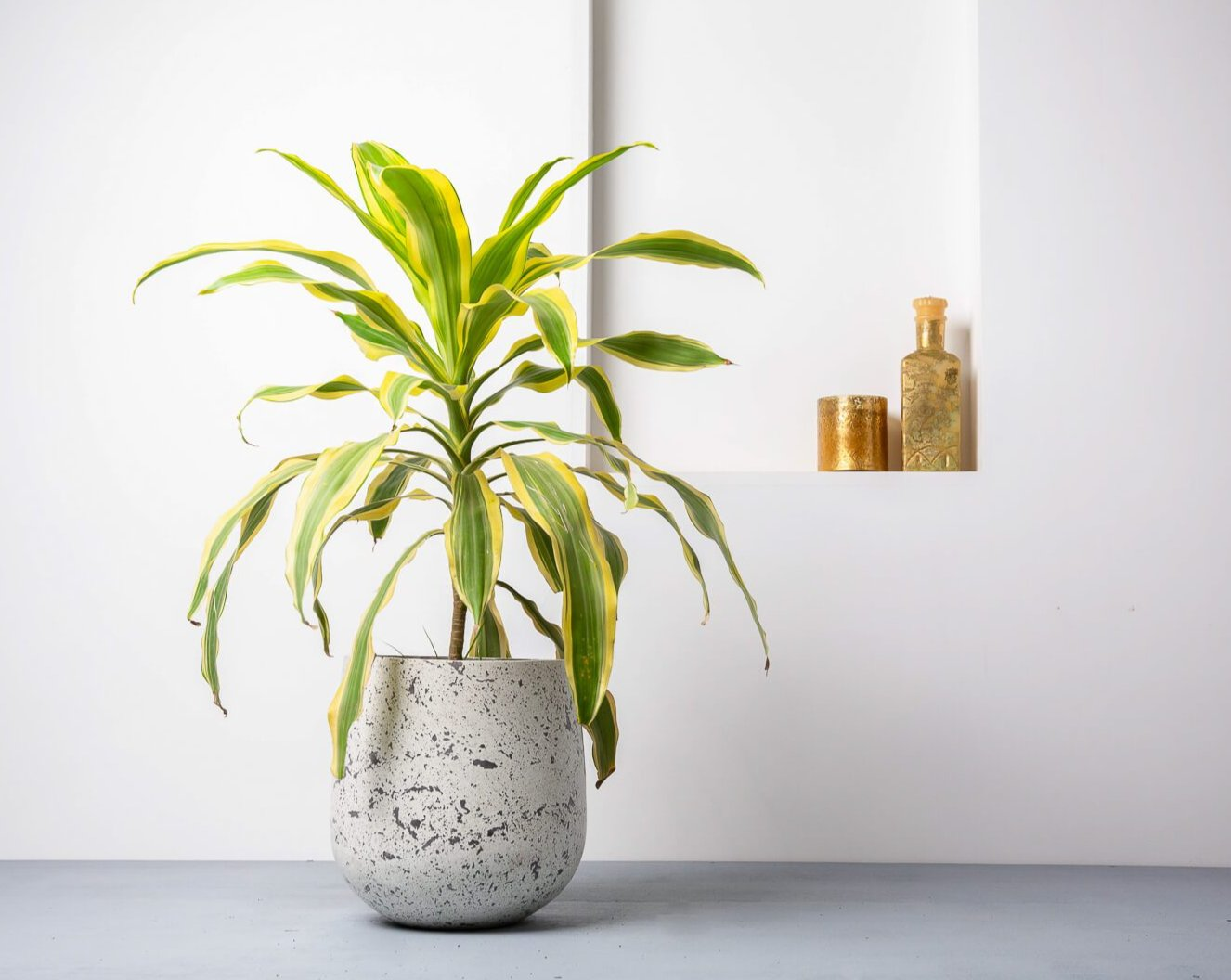 Concrete Ovate Planter White/Grey - Handpressed Collection-Eliteearth