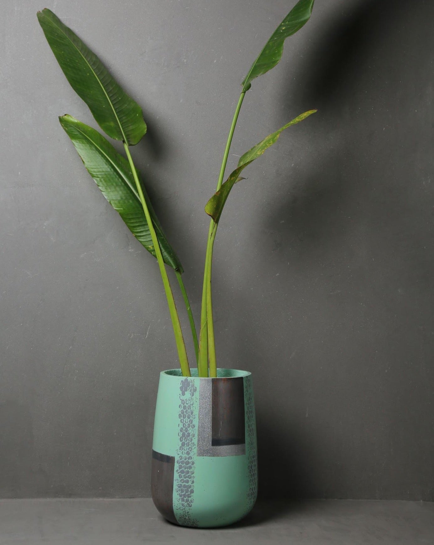 "Concrete Parabola Planter -""Cherish "" Asian Paints Colour of the year 2021 Collection-Eliteearth"