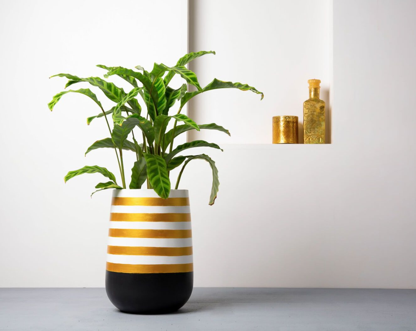 Concrete Parabola Planter Black/Gold Stripes - Handprinted Collection-Eliteearth