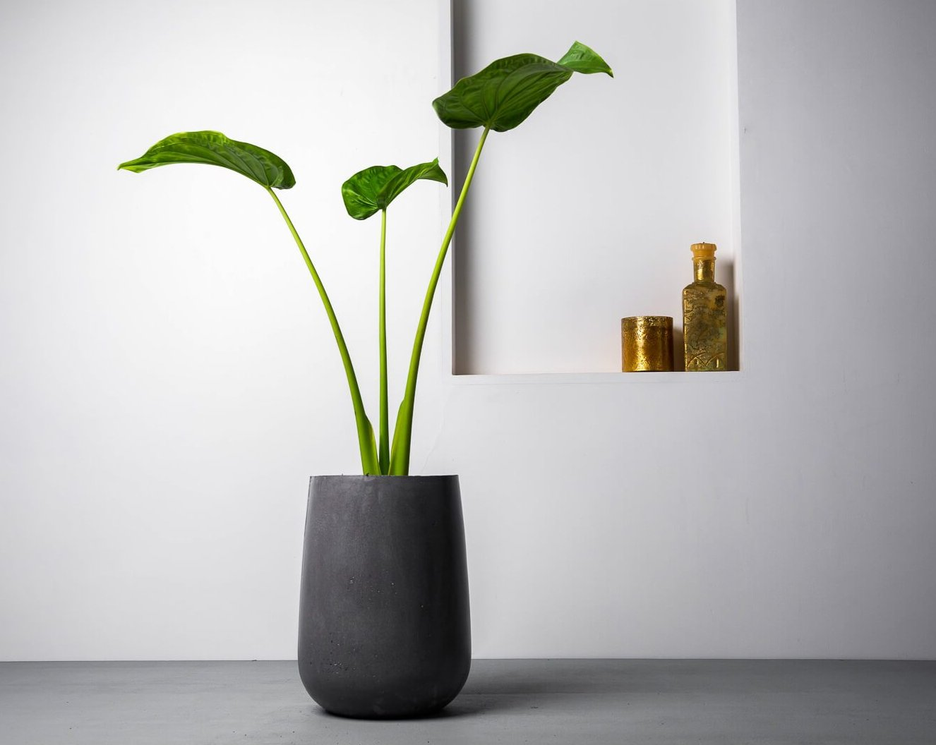 Concrete Parabola Planter Charcoal - Handpressed Collection-Eliteearth