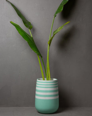 "Concrete Parabola Planter 1 -""Cherish "" Asian Paints Colour of the year 2021 Collection-Eliteearth"
