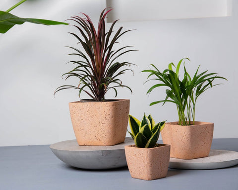 Concrete Quartz Planters Blush Pink - Handpressed Collection-Eliteearth