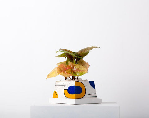 Concrete Stylish Planter-Avant-Garde Collection-Eliteearth
