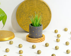 Concrete Goblet of Greens Planter - Shades of Grey - Eliteearth