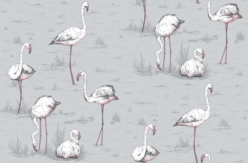Flamingos - Carta da Parati