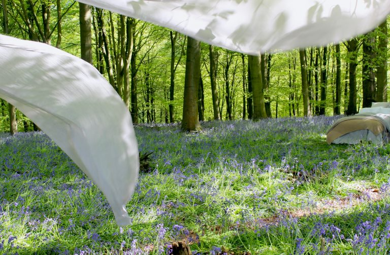 Beds and bluebells beneath the beech tree canopy