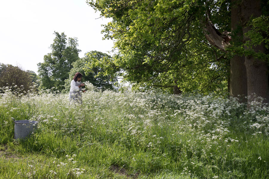 Foraging for cow parsley for Juniper & Bliss natural dye textiles used in eco homes and for ethically made sustainable fashion.